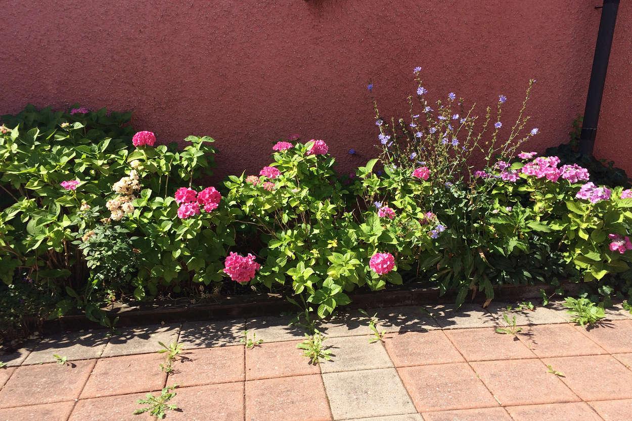 Blommande innergård