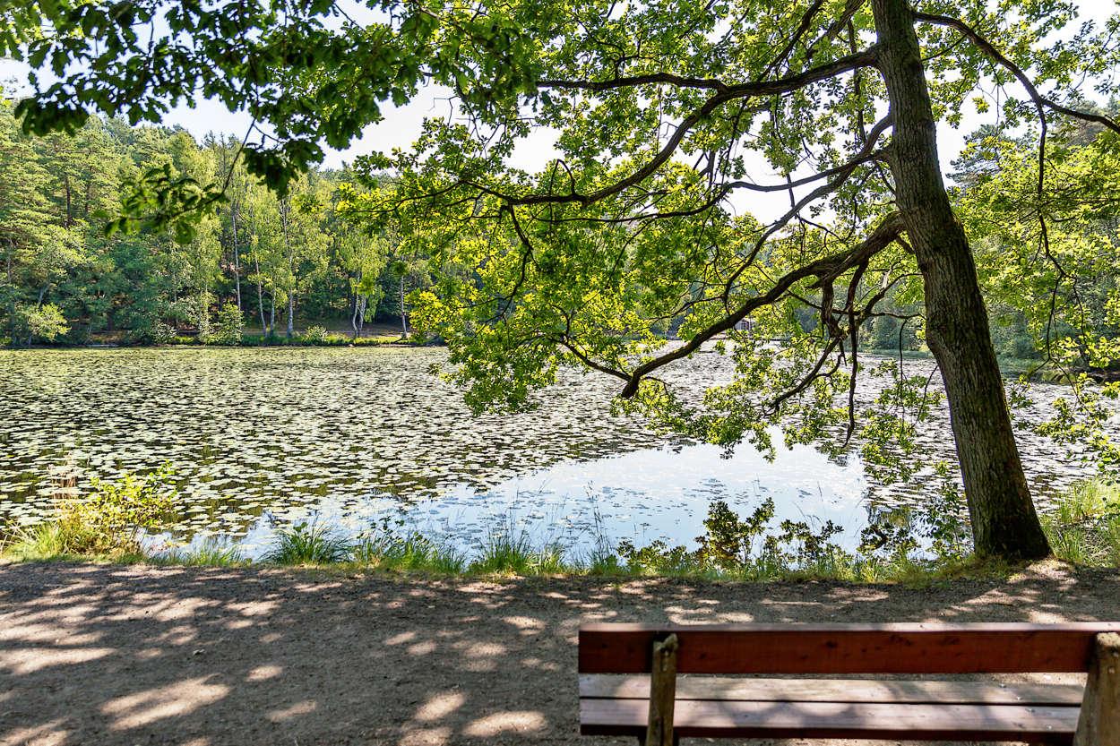 Fina promenadstråk i Hisingsparken