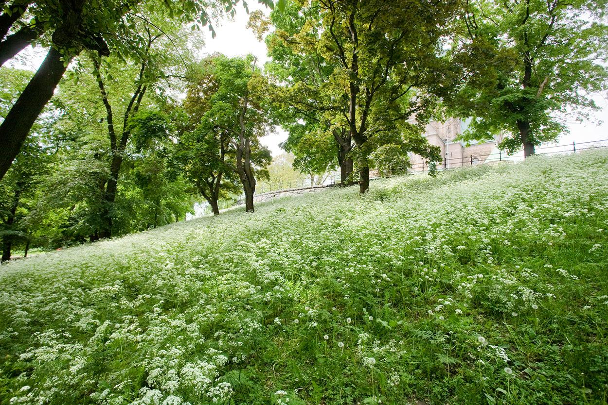 Närområdet - Vitabergsparken